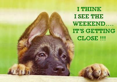 weekend-dog