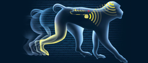 primates-paralyzed