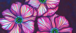 Anemones Study