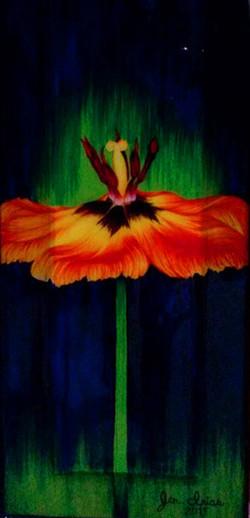Love in a Tulip
