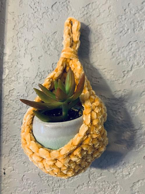 Sunshine Velvet Plant Hanging Basket