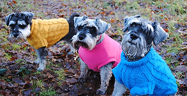 Schnauzers in Sweaters.png