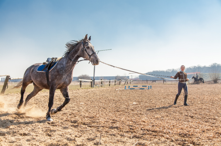 Woman training horse in training ring