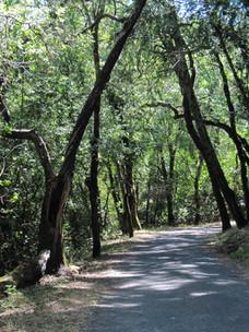 Sonoma-Valley-Regional-Park 2.jpg