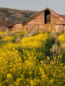 Sonoma Valley_Spring Blooms.jpg