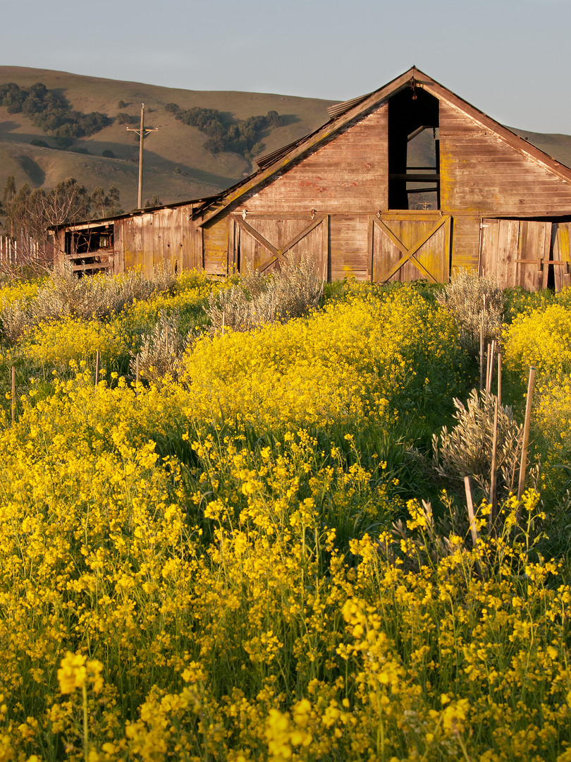 Sonoma Valley_Spring Blooms.jpg