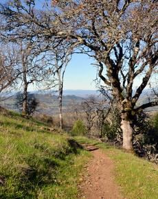 Sonoma-Valley-Regional-Park 4.JPG