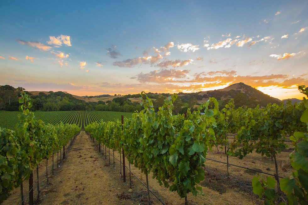 Sonoma Valley_Sunset.jpg