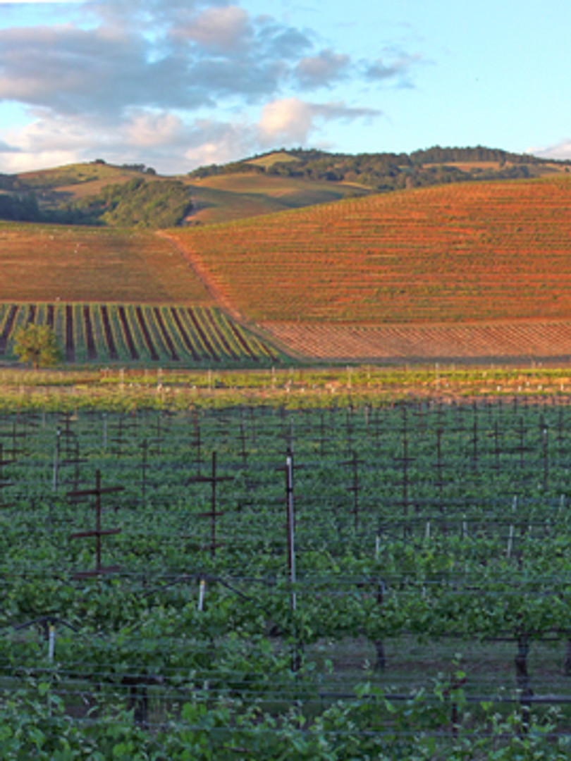 Sonoma Valley_Panorama 2.jpg