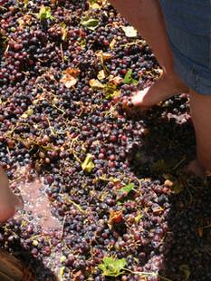 grape stomp barrel.jpg