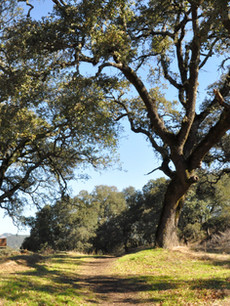 Sonoma-Valley-Regional-Park.jpg
