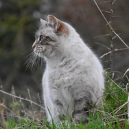 cat-4806223.jpg