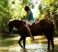 consultation comportement chevaux - Ethologie équine Céline Corredoira