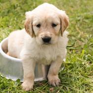 ethologue comportementaliste canin