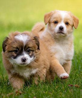 consultation comportement chien - Ethologie canine Céline Corredoira
