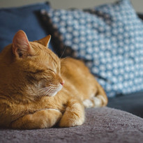 comportementaliste chat