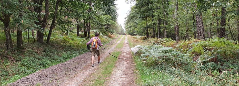 Mantrailing forêt de Chinon