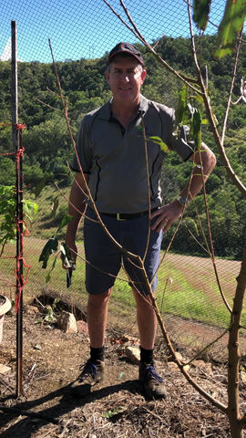 Winter pruning young Stonefruit trees Year 1.