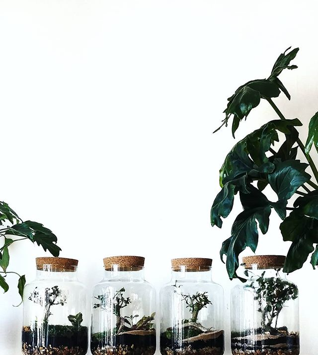 Happy #terrariumtuesday 💚 These babies