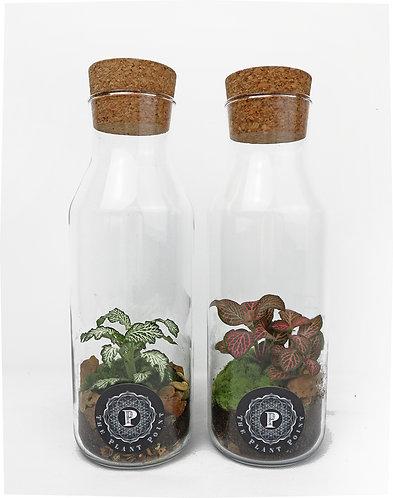 Bottle Terrarium - Large
