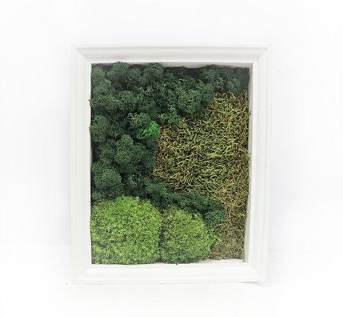 Moss frame white