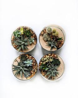 Look at those juicy mini gardens 💚 Load