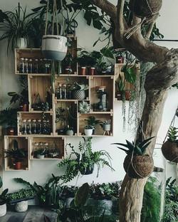 Few more shelves, few more plants and sh