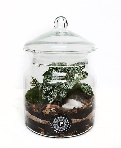 Terrarium with glass lid