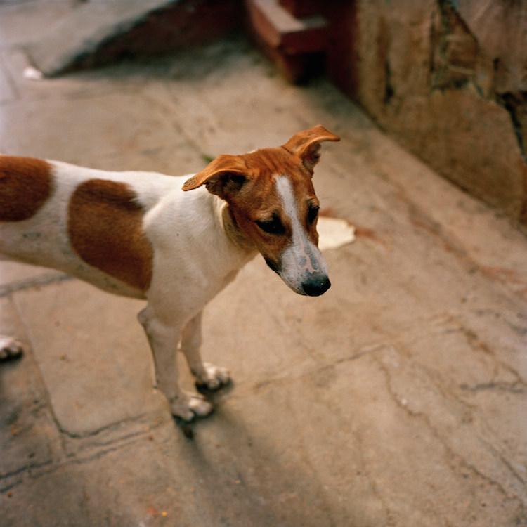 Dog & Street India
