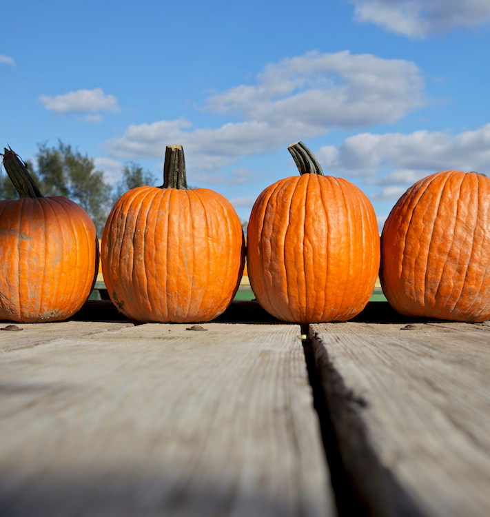 Pumpkins in row