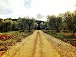 Ebbio Tuscany