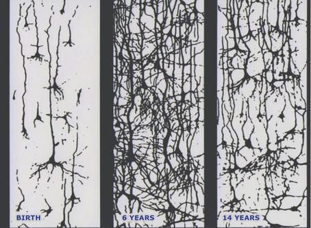 Neuroscience and Suzuki:Brain Development from Age Zero, and the Impact of Early Childhood Music Ed