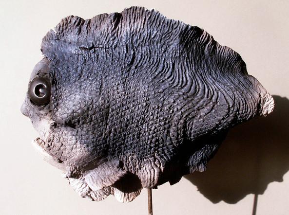 gros poisson1