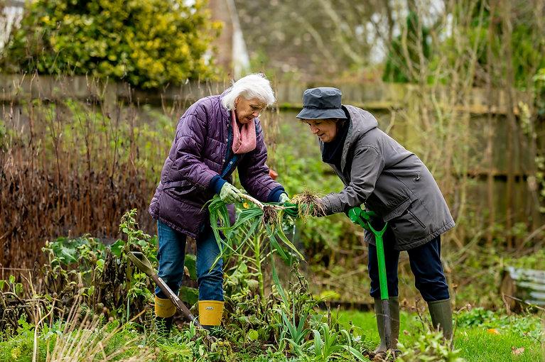 Two older women gardening