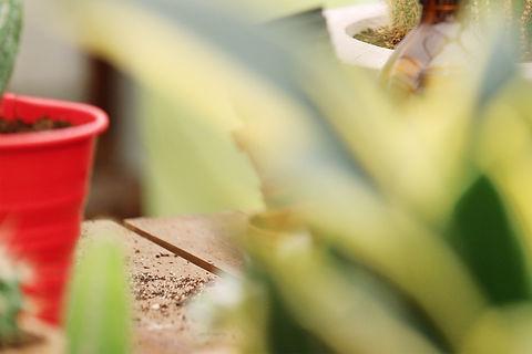 Plant Nursery_edited.jpg