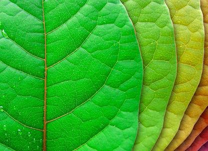 stockvault-leaves109588-16.jpg