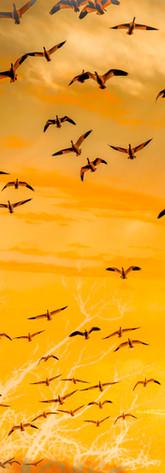 Sunrise Composite