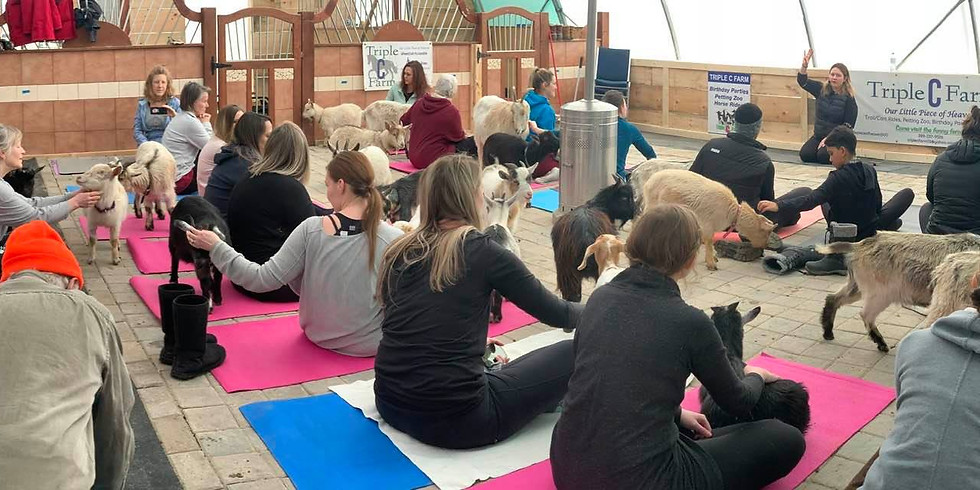 Indoor Yoga with Goats on April 11, 2020 at 10:30am