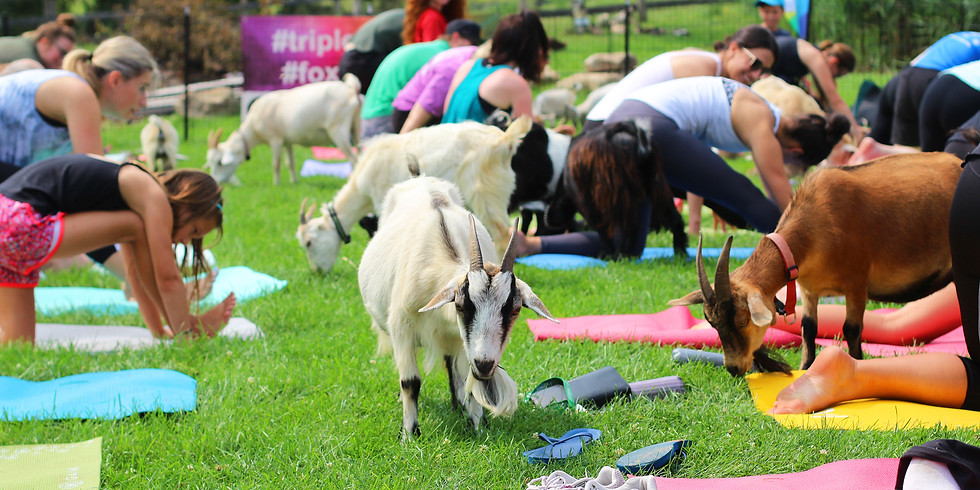 Parent and Tot Goat Yoga