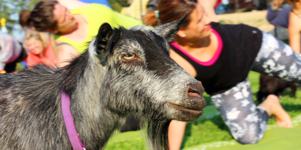 Yoga with Goats on May 10, 2020 at 2:00pm