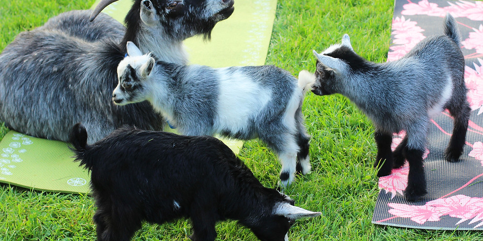 Goat Yoga - Family Style on April 12, 2020 at 2:00pm