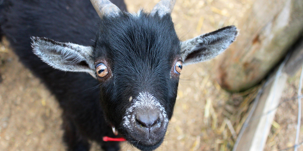 Private Yoga with Goats for Six Nations Health Services