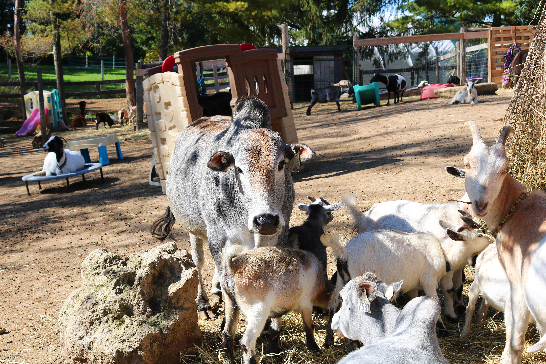 Private Petting Farm Visit