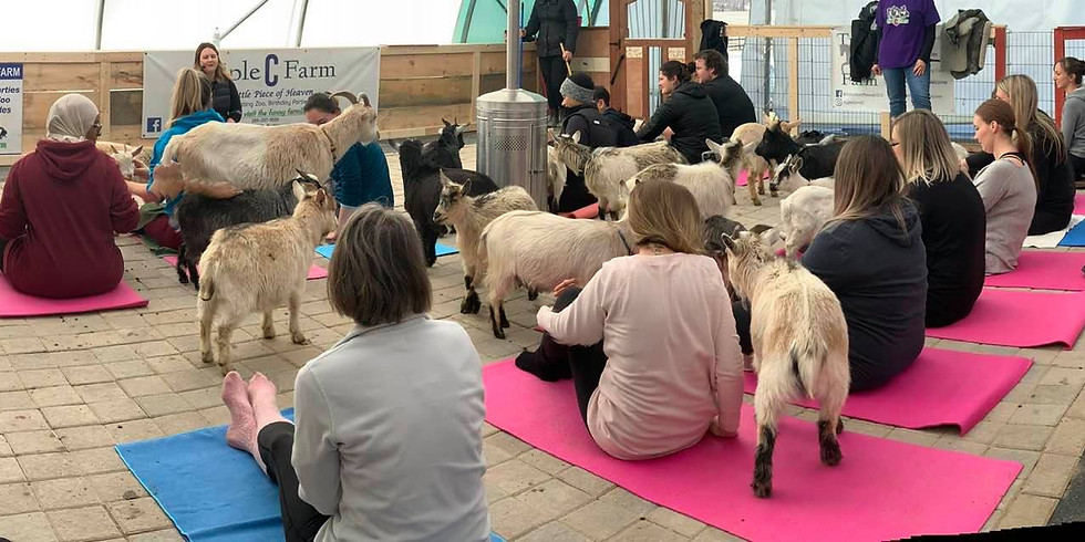 Indoor Yoga with Goats on April 19, 2020 at 2:00pm