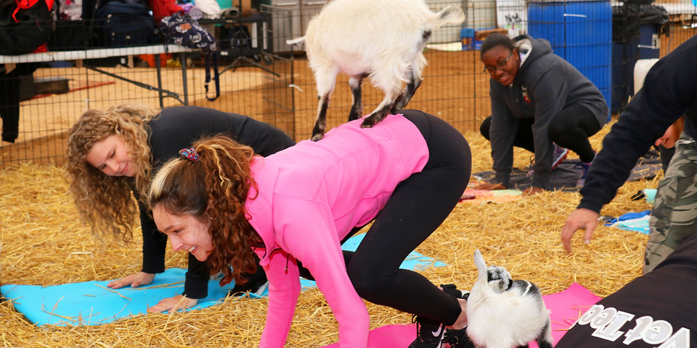 Indoor Yoga with Goats at Triple C Farm