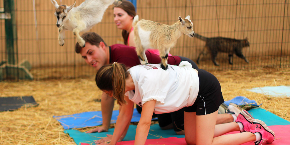 Indoor Yoga with Goats on February 13, 2020 at 6:30pm