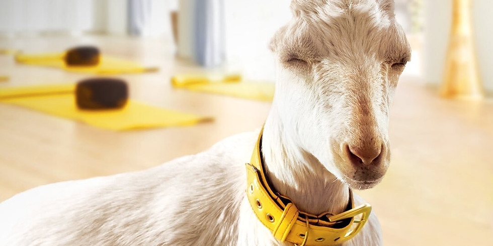 Special Needs/Accessible Yoga with Goats
