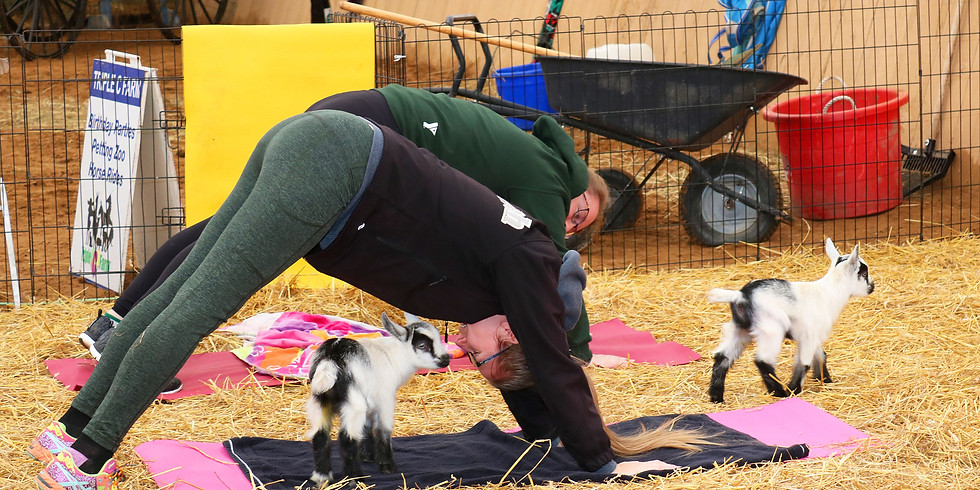 SOLD OUT! Indoor Yoga with Goats on February 29, 2020 at 1:00pm