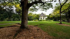 พาเดินชม Singapore Botanic Gardens สวนสาธารณะระดับเทพใจกลางเมืองสิงคโปร์