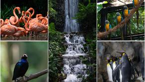 สวนนกจูร่ง (Jurong Bird Park) ส่องนกน่ารักสำหรับคนชอบนกๆ